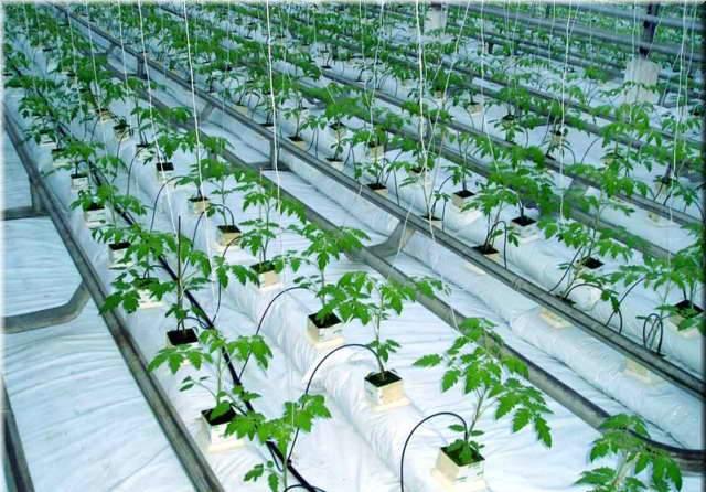 Картинки по запросу Автоматический полив растений в теплице