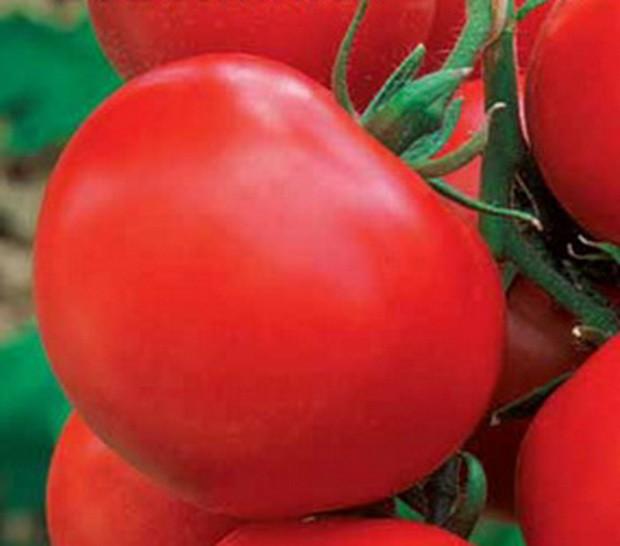 томат рябчик отзывы