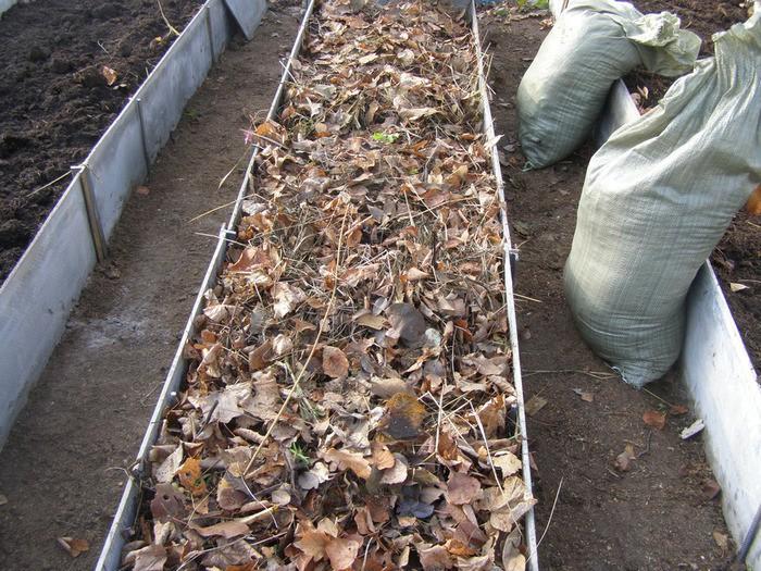 Совместное выращивание в теплице огурцов и помидор видео