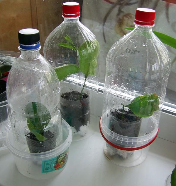Теплица из бутылки для орхидей