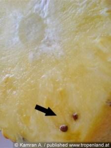 выращивание бананов в теплице