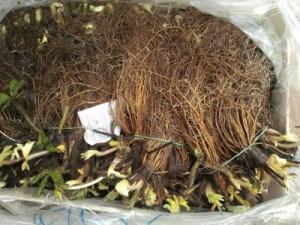 Хранить рассаду следует в полиэтиленовых пакетах