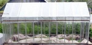 На фото показан процесс укрытия стеклянного парника пленкой