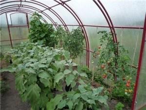 Надежный дом для теплолюбивых растений