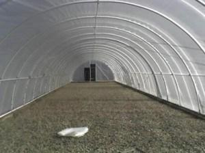 Фото промышленной теплицы с покрытием из светостабилизированной пленки