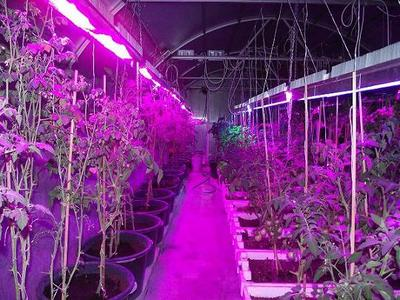 Светодиодный прожектор для подсветки растений