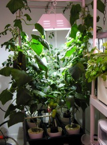 Этот способ освещения больше подходит для выращивания рассады в небольших объемах