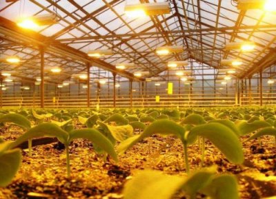 Для молодых растений важнее получать синюю часть цветового спектра