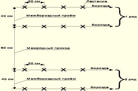 Схема обустройства грядки для парника