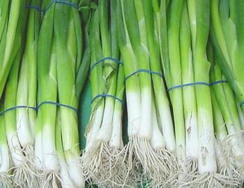 Белая часть молодого лука сладкая на вкус и годится для салатов