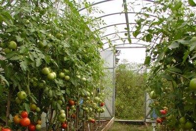 Хорошая теплица – залог богатого урожая