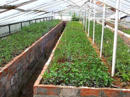 Тепличные условия для выращивания баклажан