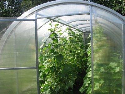 Теплица – это возможность вырастить полезные овощи при любом климате