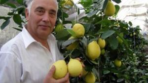 Урожай цитрусовых