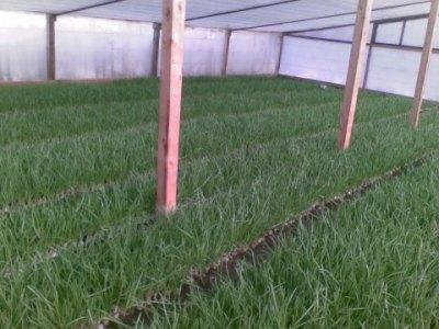 Выращивание зелени – прибыльный бизнес
