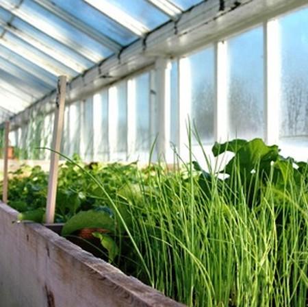 Выбор конструкции для выращивания