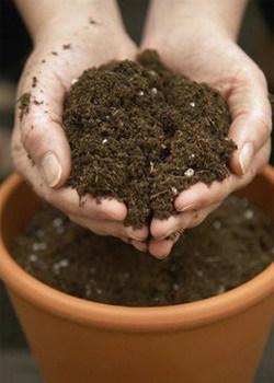Правила пересадки, как подготавливают почву