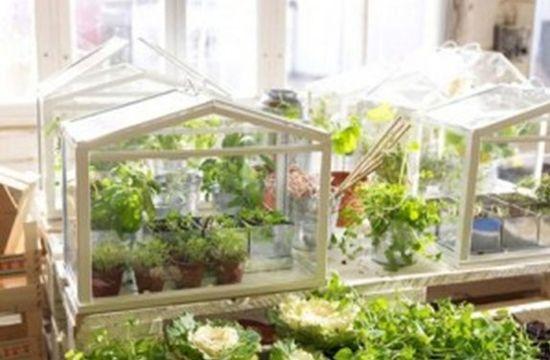 Домашня міні-теплиця — свіжі овочі та фрукти цілий рік! 1aeadb91ffa9b