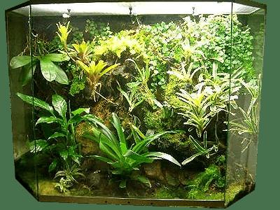 Пример мини теплицы из аквариума