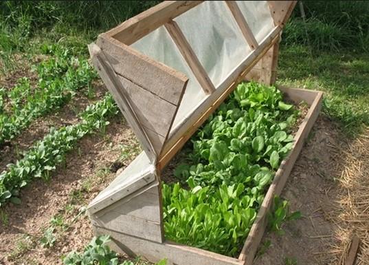 Удобный мини-парник для выращивания рассады