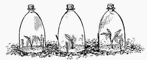 Фото теплицы из пластиковых бутылок своими руками