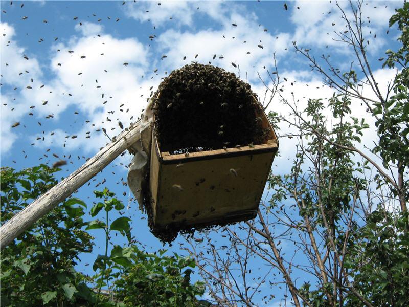 Фото приманки для пчел