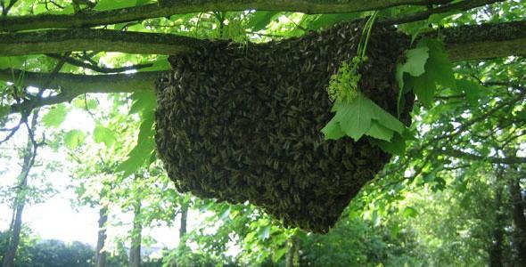 Инструкция и способы по привлечению пчел