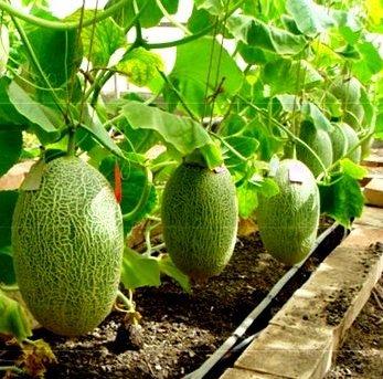 Создание условий для выращивания