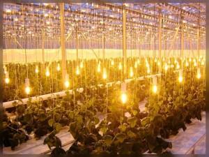 Дополнительное освещение для овощей
