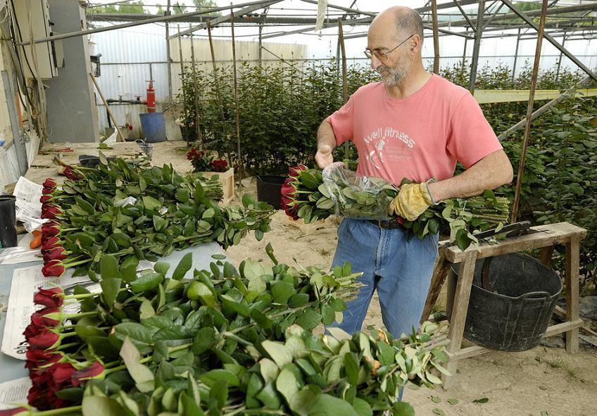 Какие цветы выращивать на продажу