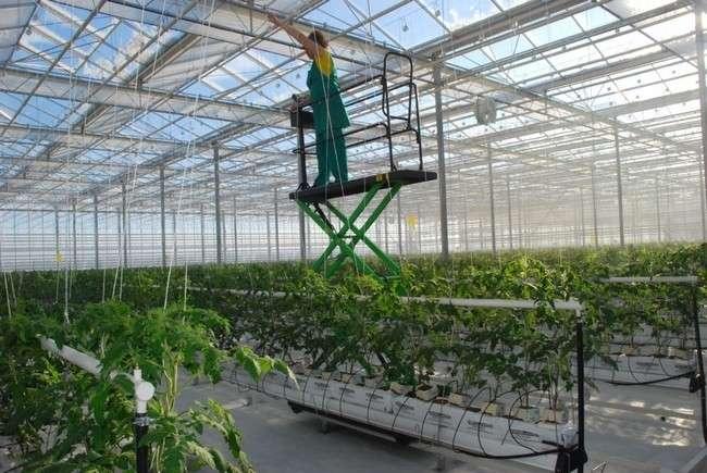 Техническое и агрономическое сопровождение