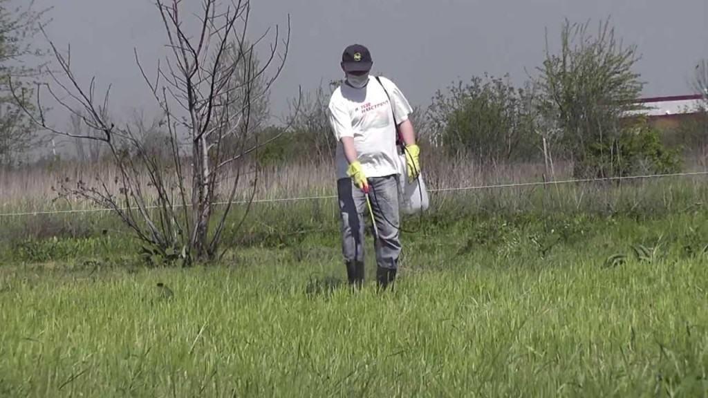 С помощью данного инсектицида производится борьба с различными однолетними и многолетними сорняками