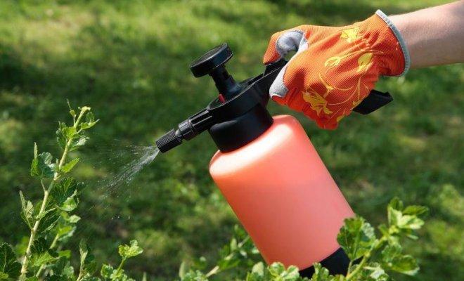Инсектициды уничтожают вредных насекомых, которые подъедают урожай