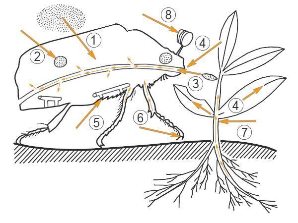 Пестициды ДДТ - это соединение, которое медленно разлагается и накапливается в природной среде