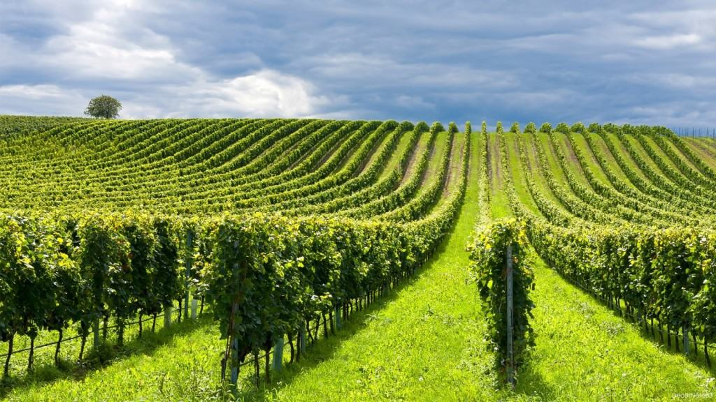 Что такое экологическое земледелие