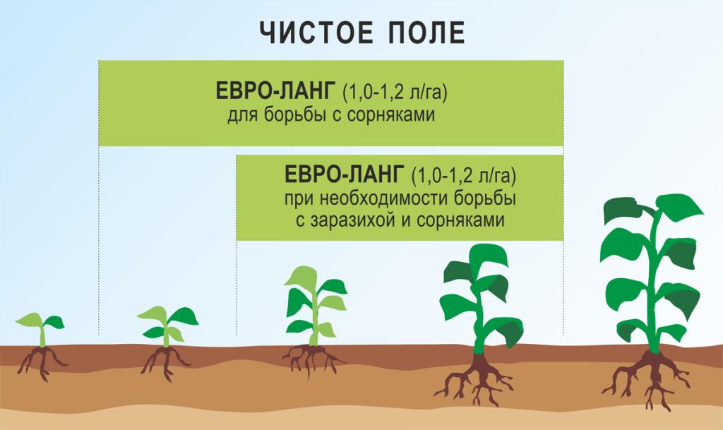 Особый вид подсолнечника не реагирует на компоненты гербицида евролайтинг