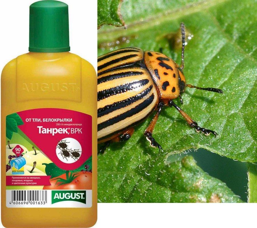 Так называются вещества, уничтожающие насекомых