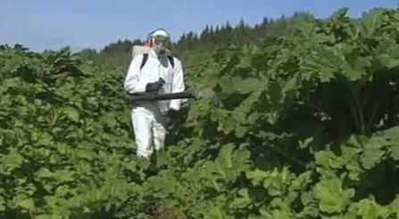 Как используются гербициды для картофеля