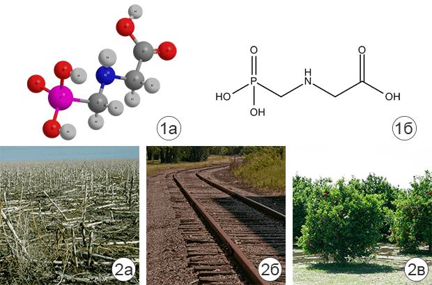 Что такое гербицид сплошного действия