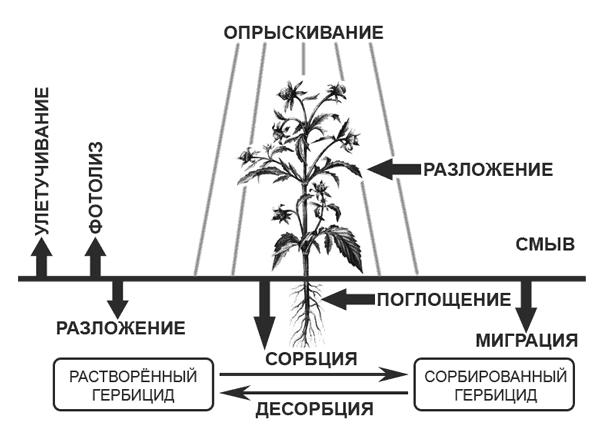 Основное действующее вещество называется дикамбой