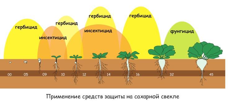 Принцип работы «Грейдера» заключается в прекращении у растений синтеза ДНК