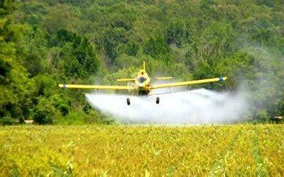 Селективные гербициды – это средство, давно известное своей эффективностью в борьбе с сорняками