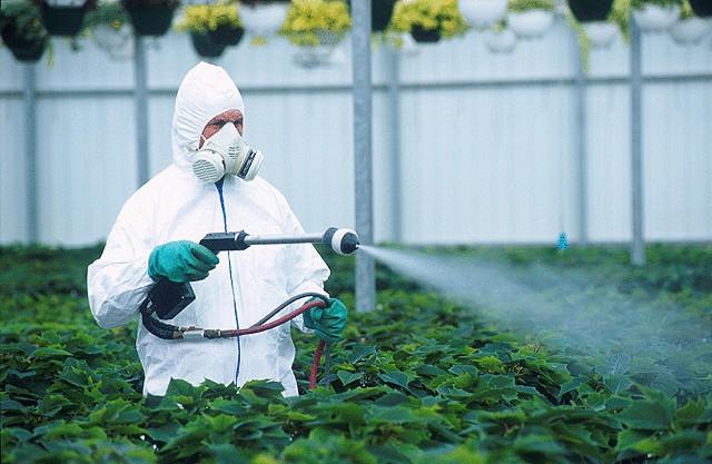 Пагубное влияние на организм человека пестицидов.