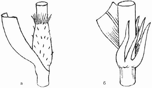 Подразделяется на гербициды сплошного и узкого спектра действия.