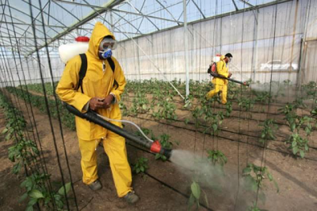 Своими руками можно сделать неопасный для здоровья и окружающей среды пестицид.