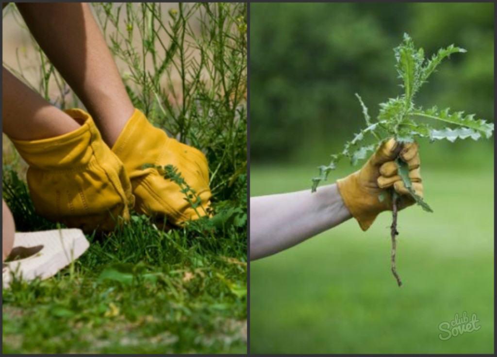 Удаление сорняков вручную – наиболее действенный, но и трудоёмкий способ