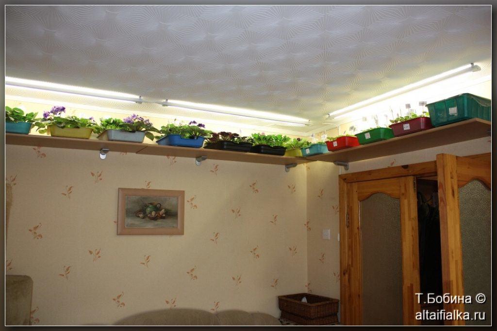 Фиалки под потолком – интересное совмещение приятного с полезным