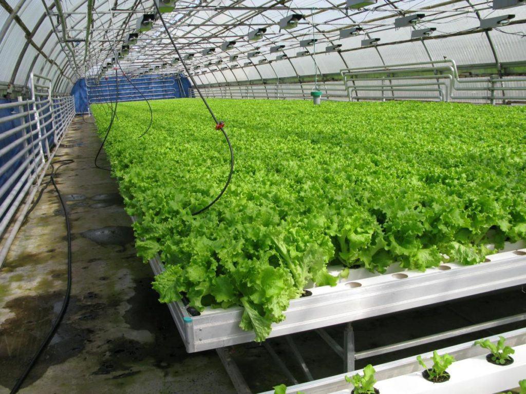 Пластиковая конструкция для выращивания культур