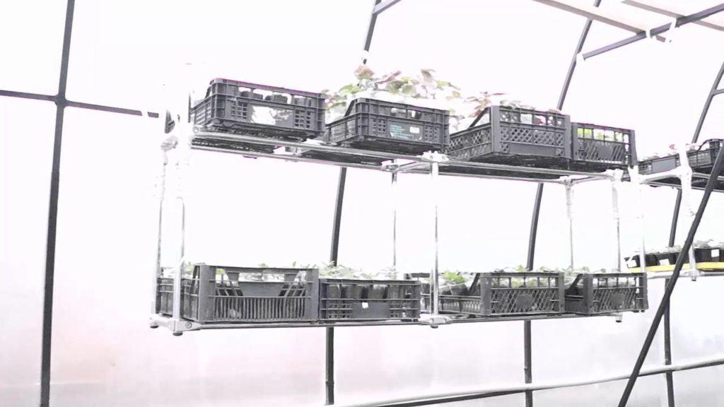 Подвесные стеллажи в теплице. Удобное решение для экономии места