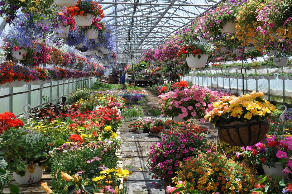 Теплица с цветами